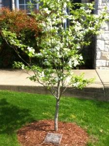 Casey's Dogwood Tree