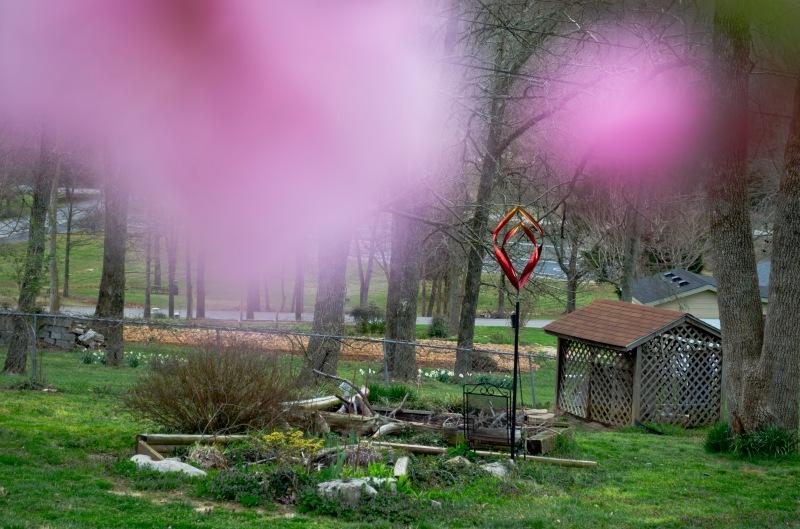 Rich pink and Mr. Renfro's garden.