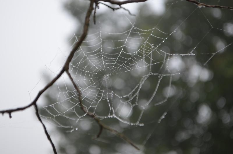 DSC_1207spiderweb