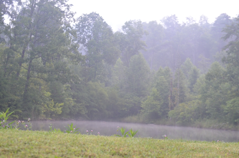 First sight of the pond in the misty morning.