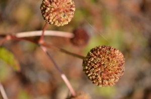 Fall pods of unknown origin