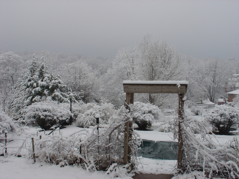 Like this, our backyard on a snowy day day, wondrous--brings out the kid in any old scrooge.